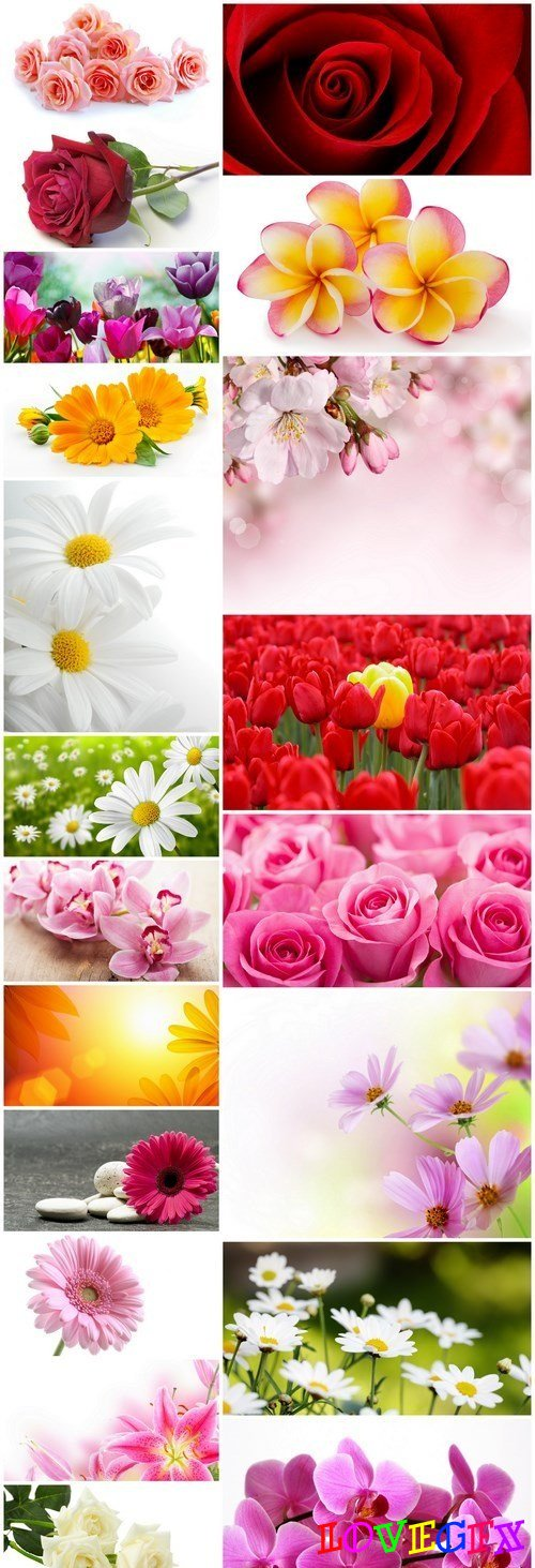 Beautiful Spring Flowers #3 - 20 HQ Images