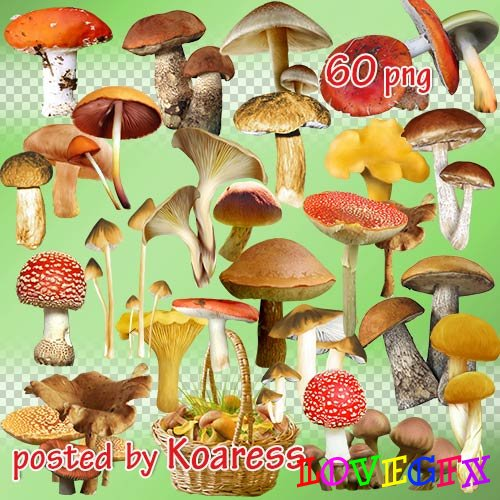 Png clipart - Mushrooms and baskets with mushrooms
