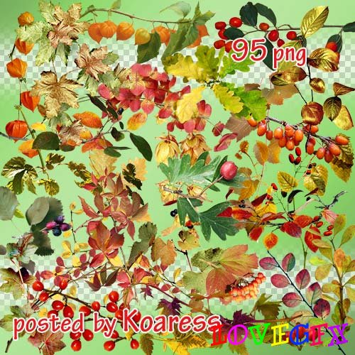 Png clipart - Autumn leaves, branches, berries