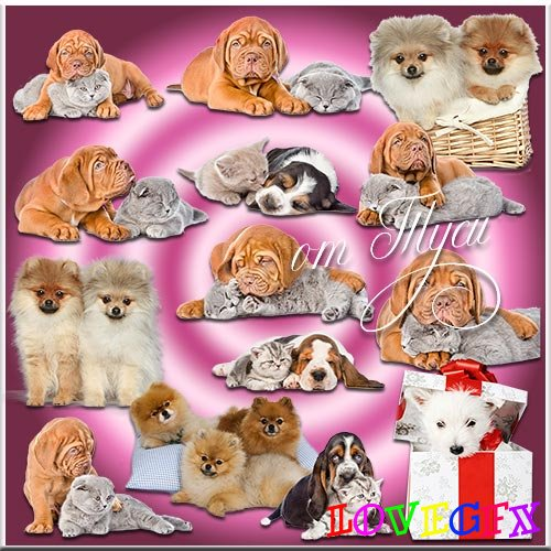 Four-legged pets - Dogs and cats - Clipart