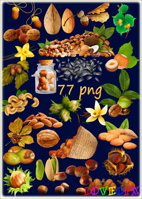 PNG clipart on a transparent background - Nuts, seeds, acorns