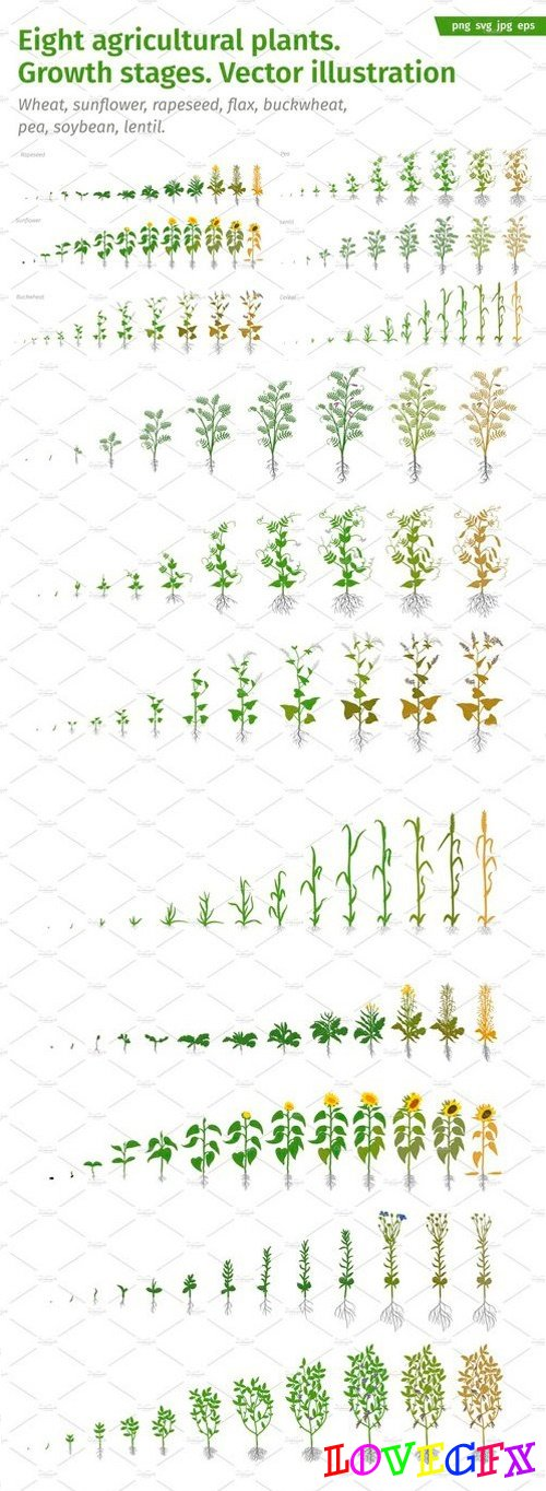 Vegetable crop growth stages 2515260