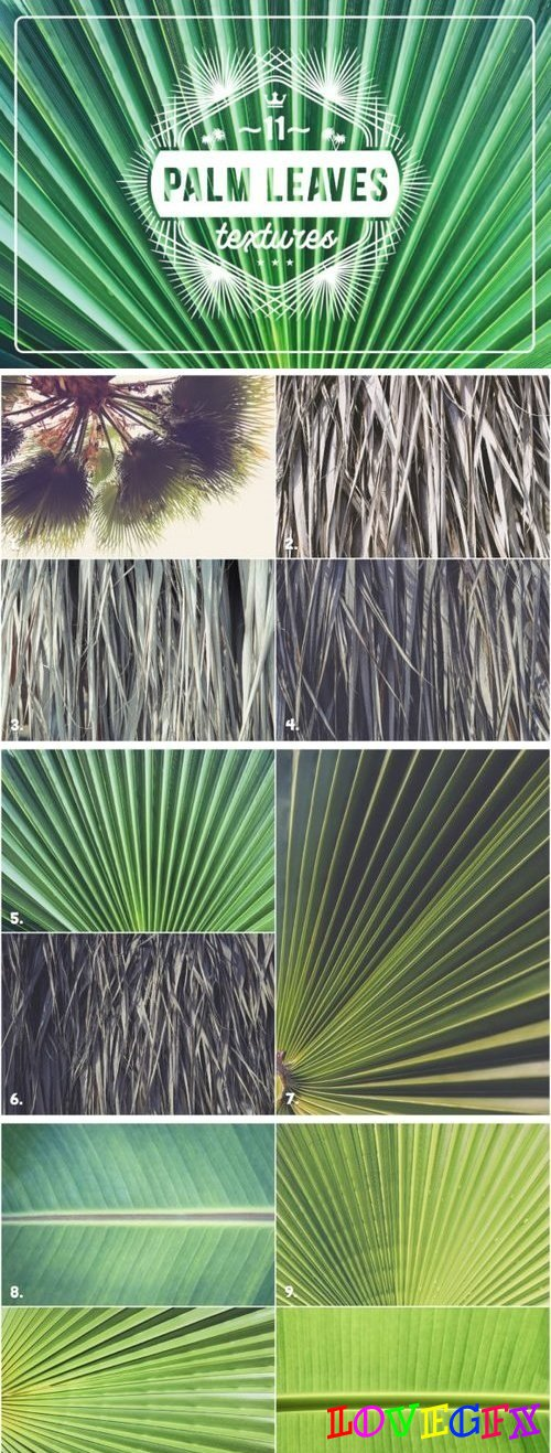 11 Palm Leaves Textures 3361601