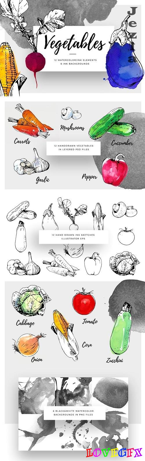 Ink Watercolour Vegetables - 778521